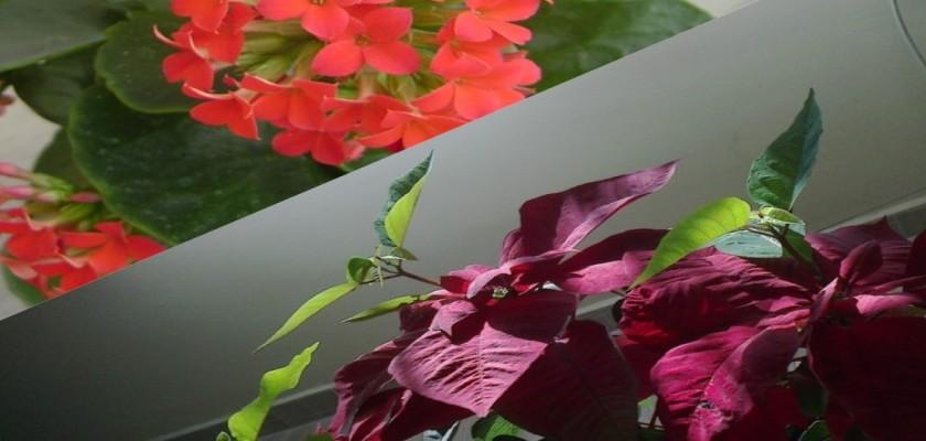 Kış Mevsiminde Salon Bitkilerine Nasıl Bakım Yapılır?